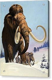 Mammoths From The Ice Age Acrylic Print by Angus McBride