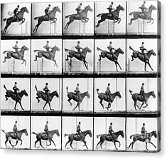 Man And Horse Jumping Acrylic Print by Eadweard Muybridge