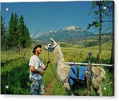 Man Teasing A Llama Acrylic Print by Jerry Voss