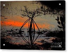 Mangrove Silhouette Acrylic Print by David Lee Thompson