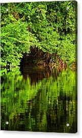 Mangrove Tunnel Acrylic Print by Sarita Rampersad