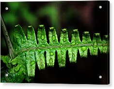 Manoa Fern Acrylic Print by Jennifer Bright