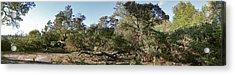 Manzanita And Oaks Acrylic Print by Larry Darnell