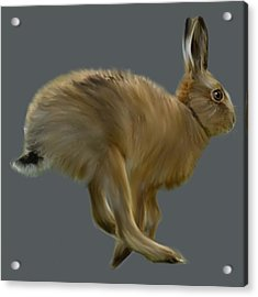 March Hare Acrylic Print by Dave H