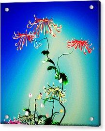 Math Chrysanthemum 1 Acrylic Print by GuoJun Pan