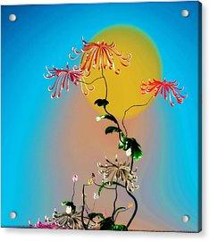 Math Chrysanthemum 2 Acrylic Print by GuoJun Pan
