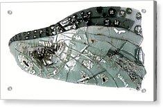 Mayfly Wing  Acrylic Print by Sarah King