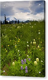 Meadow Beneath The Storm Acrylic Print by Mike  Dawson