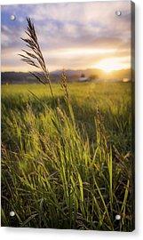 Meadow Light Acrylic Print by Chad Dutson