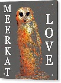 Meerkat Love Acrylic Print by David Lee Thompson