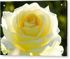 Mellow Yellow Rose Acrylic Print by Sabrina L Ryan