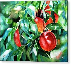 Melocotones- Peaches Acrylic Print by Maria Balcells