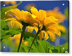 Mexican Sunflower Tree Acrylic Print by Melanie Moraga