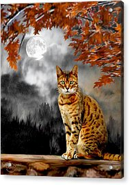 Midnight Tom 1 Acrylic Print by Ron Chambers