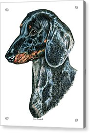 Miniature, Mini, Dachshund, Smooth Acrylic Print by Kathleen Sepulveda