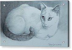 Miss Kitty Acrylic Print by Tanja Ware