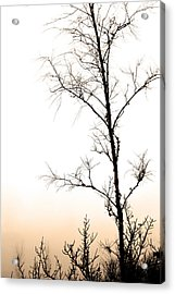 Mist, Trees And Roads Acrylic Print by Toppart Sweden