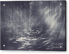 Misty Enchanted Pine Forest Acrylic Print by Jorgo Photography - Wall Art Gallery
