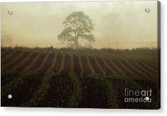 Misty Morning Acrylic Print by Robert Brown