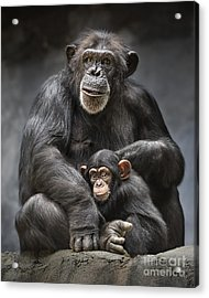 Mom And Baby Acrylic Print by Jamie Pham