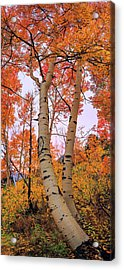 Moments Of Fall Acrylic Print by Chad Dutson