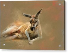 Monday Morning Drowsies Kangaroo Art Acrylic Print by Jai Johnson