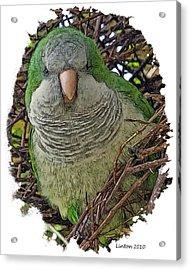 Monk Parakeet Acrylic Print by Larry Linton