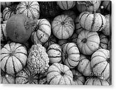Monochrome Gourds Acrylic Print by Robert Wilder Jr