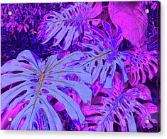 Monstera Leaves - In Violets Acrylic Print by Kerri Ligatich