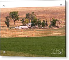 Montana Harvest Time Acrylic Print by David Bearden