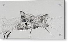 Monty  Sleepy Boy Acrylic Print by Vincent Alexander Booth