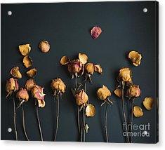 Moody Roses I Floral Still Life Acrylic Print by Sonja Quintero