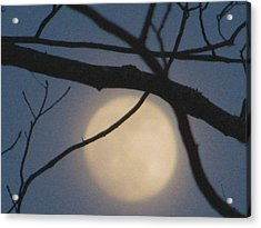 Moon Glow Acrylic Print by Lindie Racz