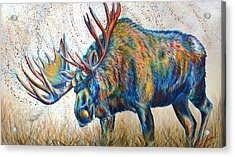 Moose Rut Acrylic Print by Teshia Art