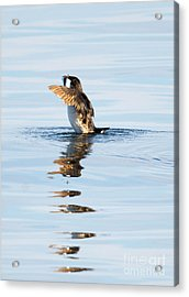 More Than A Mouthful Acrylic Print by Mike Dawson