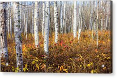 More To The Under-story Acrylic Print by Mary Amerman