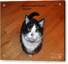 More Words From  Teddy The Ninja Cat Acrylic Print by Reb Frost