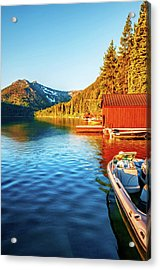 Morning Light Acrylic Print by Maria Coulson