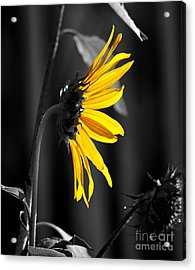 Morning Sun Acrylic Print by Clayton Bruster