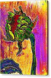 Mornings Glow Acrylic Print by Wayne Potrafka