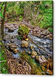 Mossy Boulder Acrylic Print by Christopher Holmes