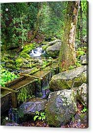 Mossy Creek Acrylic Print by Marty Koch