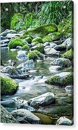 Mossy Forest Stream Acrylic Print by Az Jackson