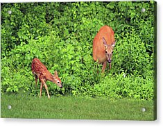 Mother And Child Acrylic Print by Karol Livote