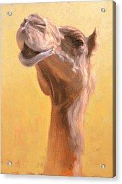 Mother Camel Acrylic Print by Ben Hubbard