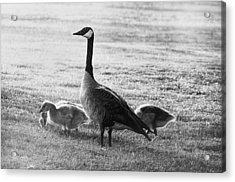 Mother Goose Acrylic Print by Camille Lopez