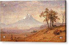 Mount Hood Acrylic Print by Albert Bierstadt