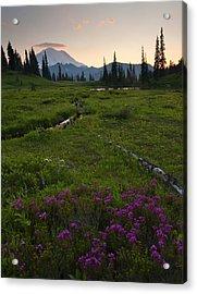 Mountain Heather Sunset Acrylic Print by Mike  Dawson