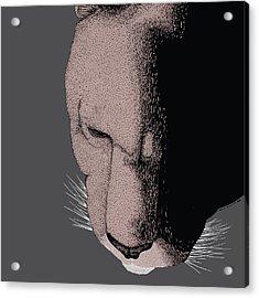 Mountain Lion Acrylic Print by Karl Addison