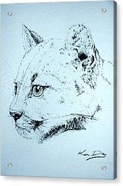 Mountain Lion Acrylic Print by Ken Day